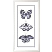Star Creations Mono Chrome Butterflies II by Grace Popp Framed Painting Print