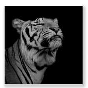 Two Palms Art Bazaar 'Proud Tiger' Wall Art Print on Plaque; 15'' H x 15'' W x 1'' D