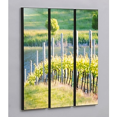 Wilson Studios Rows of Vineyard Grapes 3 Piece Photographic Print Set