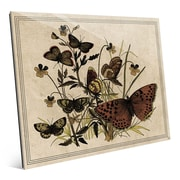 Click Wall Art '7 Butterfly and Clovers Drawing Paper' Graphic Art; 16'' H x 20'' W x 1'' D