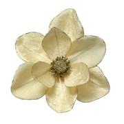 ZiaBella Velvet Magnolia w/ Gold Sparkle Trim on Clip