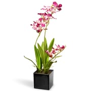 National Tree Co. Orchid Flowers in Pot