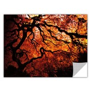 ArtApeelz 'Fire Breather: Japanese Tree' by John Black Photographic Print Removable Wall Decal