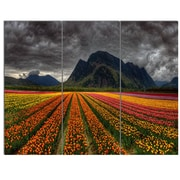 DesignArt 'Beautiful Colored Tulips Panorama' 3 Piece Photographic Print on Canvas Set
