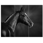 DesignArt 'Black Arabian Horse Portrait' 3 Piece Photographic Print on Canvas Set
