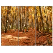 DesignArt 'Colorful Fall Forest w/ Fallen Leaves' 3 Piece Photographic Print on Canvas Set