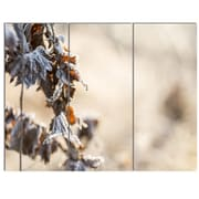 DesignArt 'Beautiful Grass Covered w/ Ice' 3 Piece Photographic Print on Canvas Set