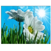 DesignArt 'Beautiful Chamomiles in Bright Sunlight' 3 Piece Photographic Print on Canvas Set