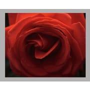 Wallhogs Batie's Rose Glossy Poster; 19'' H x 24'' W