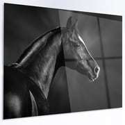 DesignArt 'Black Arabian Horse Portrait' Photographic Print on Metal; 40'' H x 48'' W x 1'' D