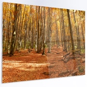 DesignArt 'Colorful Fall Forest w/ Fallen Leaves' Photographic Print on Metal
