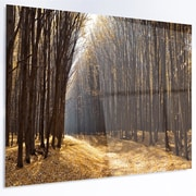 DesignArt 'Light in the Forest Path Panorama' Photographic Print on Metal; 12'' H x 28'' W x 1'' D