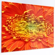 DesignArt 'Beautiful Gerbera Flower in Brig' Photographic Print on Metal; 12'' H x 28'' W x 1'' D