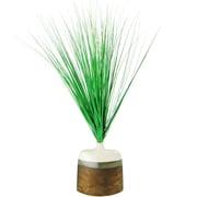 LCGFlorals Maiden Grass in Decorative Vase