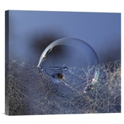 Global Gallery 'Blue Bubble Morning' by Kent Mathiesen Photographic Print on Wrapped Canvas