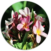 DesignArt 'Beautiful Little Pink White Flowers' Floral Photographic Print on Metal