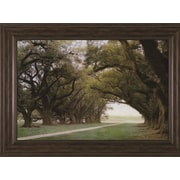 Art Effects 'Alley of the Oaks' by William Guion Framed Photographic Print