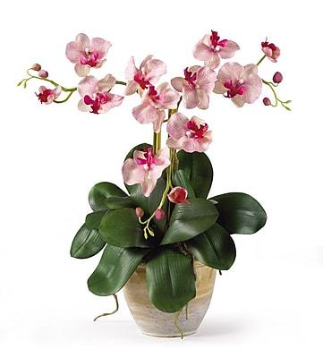 Alcott Hill Triple Mini Phalaenopsis Silk Orchid Flowers in Pink White WYF078280231342