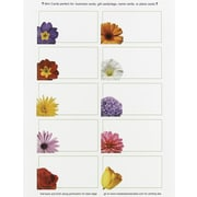 Great Papers® Floral Mini Cards