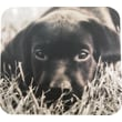 Staples® Black Lab Mouse Pad
