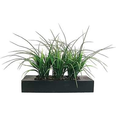 Laura Ashley 11in. Green Grass in Contemporary Wood Planter
