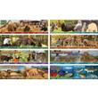 Mark Twain Wildlife Habitats Bulletin Board Set