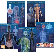 Mark Twain Human Body Facts Bulletin Board Set