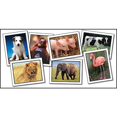 Key Education Favorite Animals Learning Cards