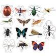 Carson-Dellosa Insects: Photographic Shape Stickers