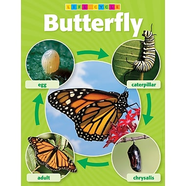 Scholastic Butterfly Life Cycle Photo Chart