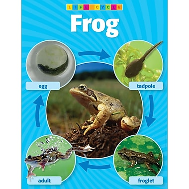Scholastic Frog Life Cycle Photo Chart