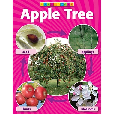 Scholastic Apple Tree Life Cycle Photo Chart