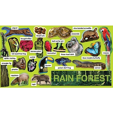 Scholastic Rainforest Plants & Animals Mini Bulletin Board