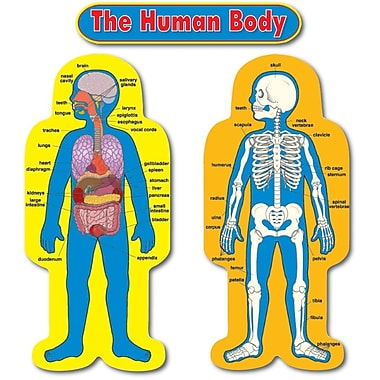 Carson-Dellosa Child-Size Human Body Bulletin Board Set