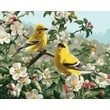 """Plaid:Craft 16"""" x 20"""" Non-toxic Paint By Number Kit, Goldfinches (216-80)"""