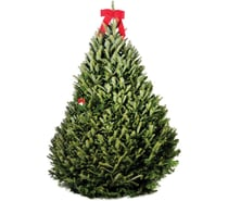 Christmas Trees / Wreaths / Decor