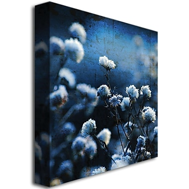 Trademark Global Philippe Sainte Laudy in.Blue Bokeyin. Canvas Art, 35in. x 35in.
