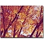 Trademark Global Ariane Moshayedi trees Canvas Art, 30