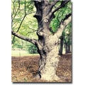 Trademark Global Ariane Moshayedi in.Treein. Canvas Art, 30in. x 47in.