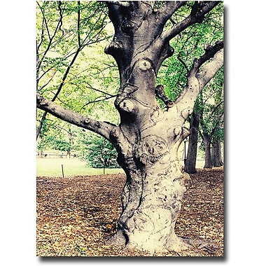 Trademark Global Ariane Moshayedi in.Treein. Canvas Art, 16in. x 24in.