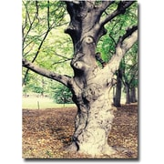 "Trademark Global Ariane Moshayedi ""Tree"" Canvas Art, 22"" x 32"""