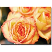 "Trademark Global Ariane Moshayedi ""Roses"" Canvas Art, 30"" x 47"""