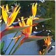 Trademark Global Amy Vangsgard in.Bird of Paradise Backlit by Sunin. Canvas Art, 24in. x 24in.