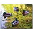 "Trademark Global Amy Vangsgard ""Four Ducks on Pond"" Canvas Art, 18"" x 24"""