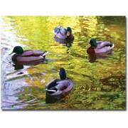 "Trademark Global Amy Vangsgard ""Four Ducks on Pond"" Canvas Art, 24"" x 32"""