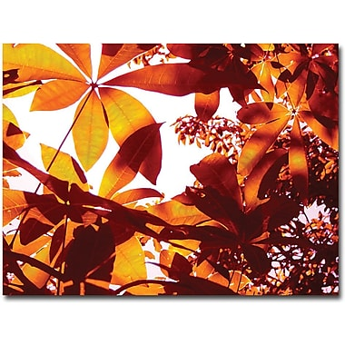 Trademark Global Amy Vangsgard in.Light Coming Through Tree Leavesin. Canvas Art, 35in. x 47in.
