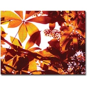 "Trademark Global Amy Vangsgard ""Light Coming Through Tree Leaves"" Canvas Arts"