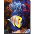 "Trademark Global Amy Vangsgard ""Longnose Butterfly Fish"" Canvas Art, 26"" x 32"""