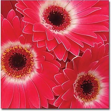 Trademark Global Amy Vangsgard in.Magenta Gerbersin. Canvas Art, 18in. x 18in.