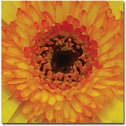 Trademark Global Amy Vangsgard Orange and Black Gerber Centers Canvas Art, 35 x 35